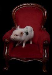 Little Piggy Tornado