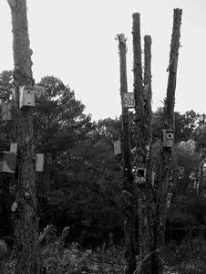 Bird houses in a park