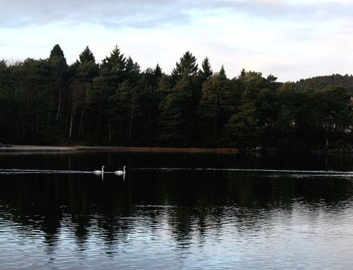Two Swans - Ellasart