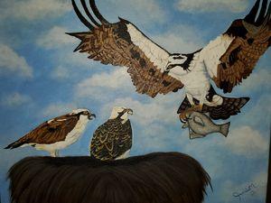 Ospreys of Johnathan Dickinson