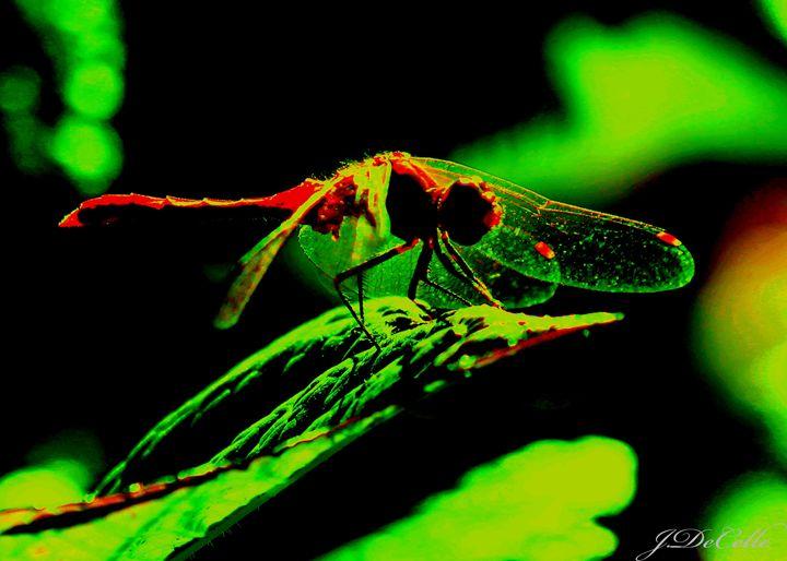 Dragonfly - BuddingBrilliance