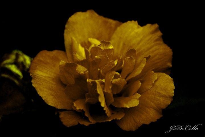 Gold Rose - BuddingBrilliance