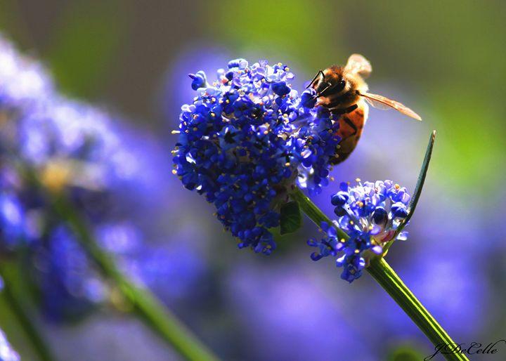 Bee me - BuddingBrilliance