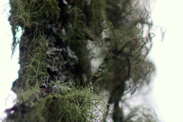 Moss1 - Artist Tammy Cook