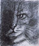 Dark cat. Shades and light