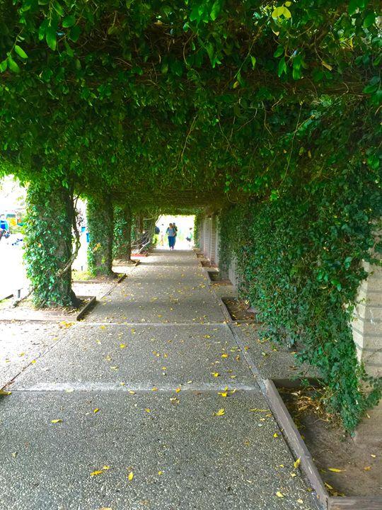 Vine Pathway - VintageKells