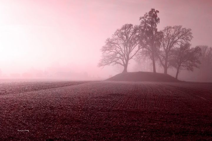 Behind the Mist - Graceful