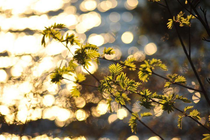 Spring Glow - Graceful