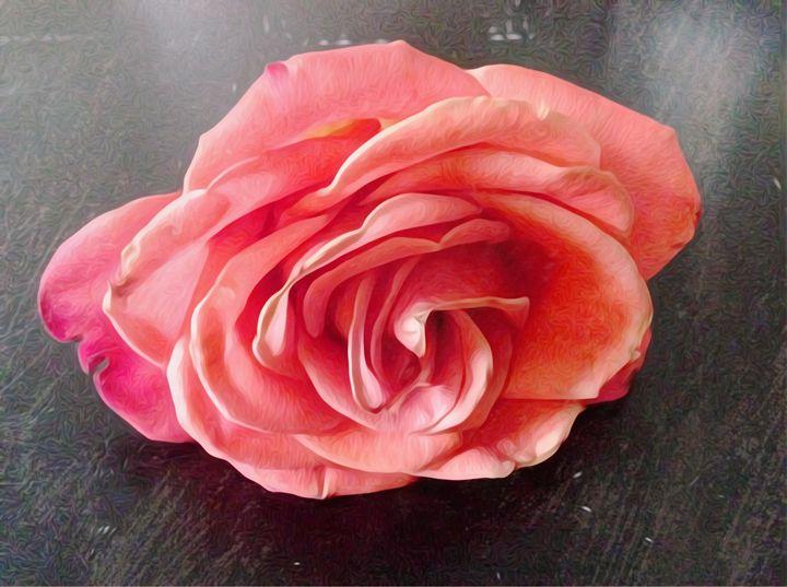 Rose Petals - Tanya