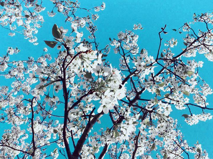 Spring Flowers - Tanya