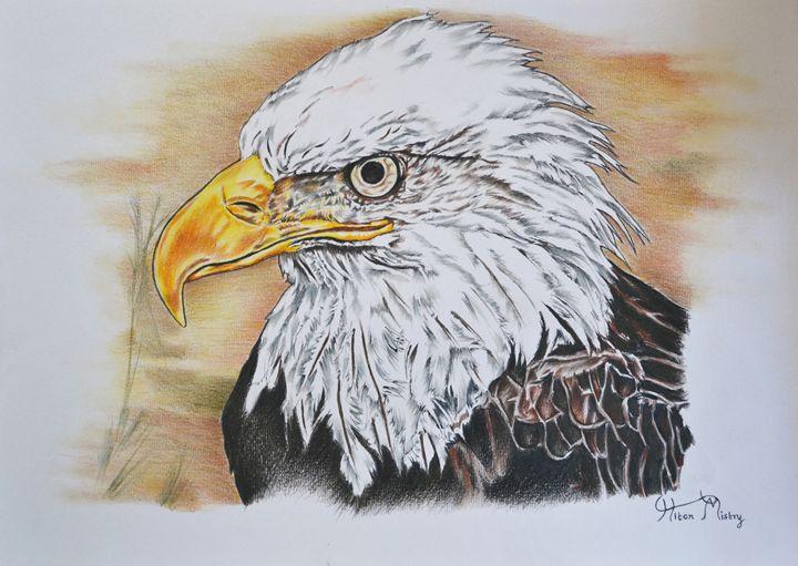 Bald eagle - Mistry Visuals