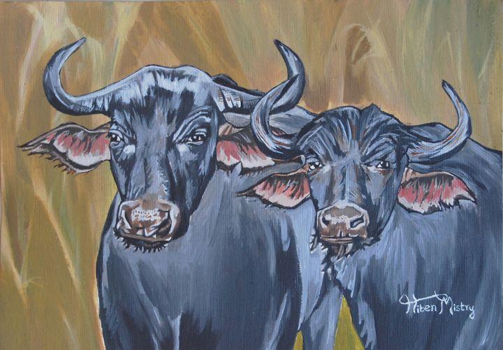 Buffaloes - Mistry Visuals