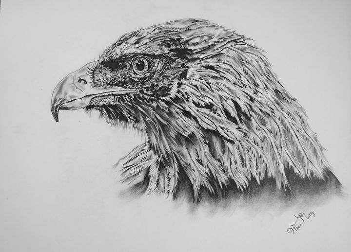 Eagle portrait - Mistry Visuals