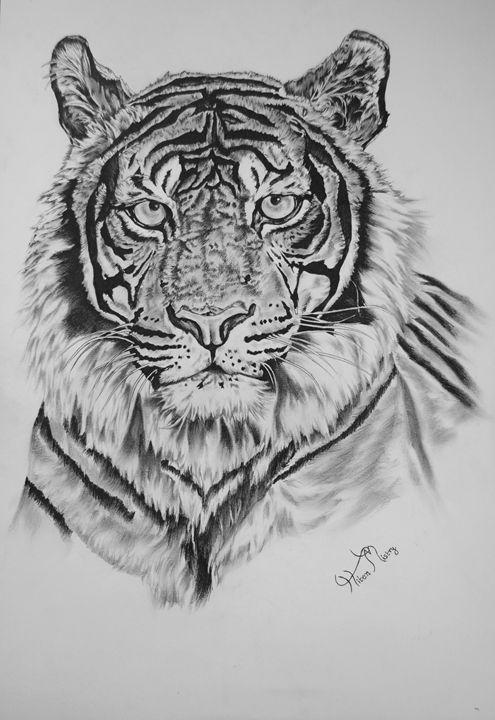 tiget portrait - Mistry Visuals