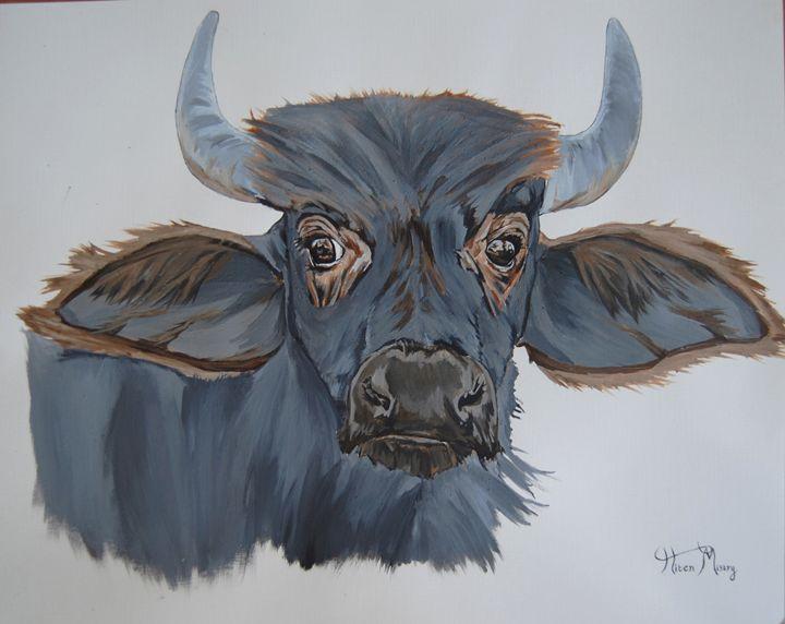 gazing buffalo - Mistry Visuals