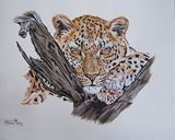 leopard artwork