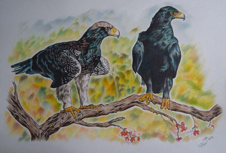 black eagles - Mistry Visuals