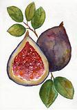 Fig n' Leaves original, framed