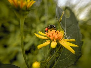 A Bee on Flower