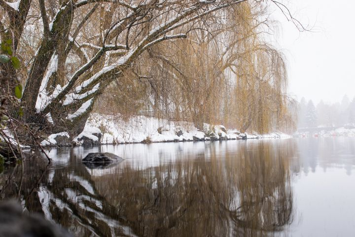 Riverbank in the Winter - Crystal Madsen Photography