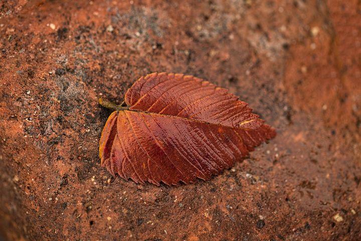 Solitude Autum Leaf - Crystal Madsen Photography