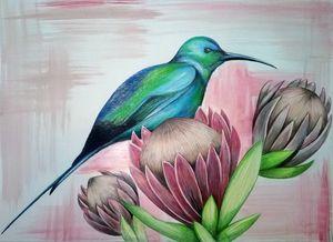 Bird on King Protea