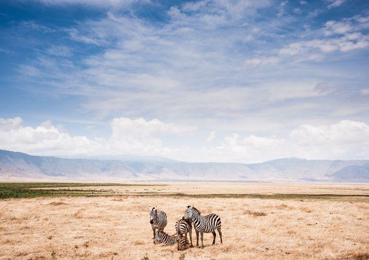 Ngorongoro Crater - Imageinit Gallery