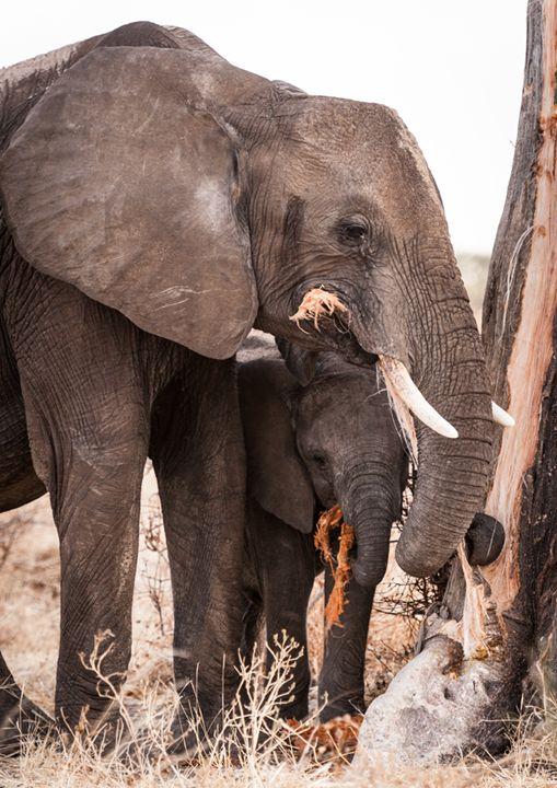 Elephant's Mark - Imageinit Gallery