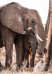 Elephant's Mark