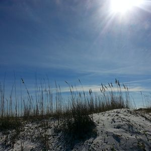 Forgotten Dunes II