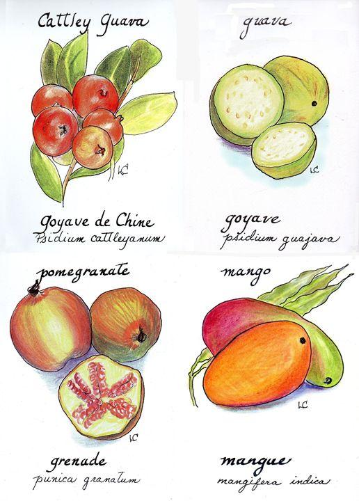 Four exotic fruits - imaginart