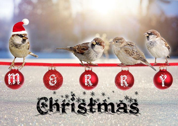 Little sparrows Christmas - imaginart