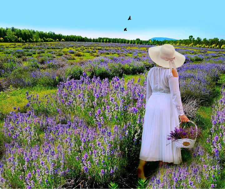 In the lavender field - imaginart
