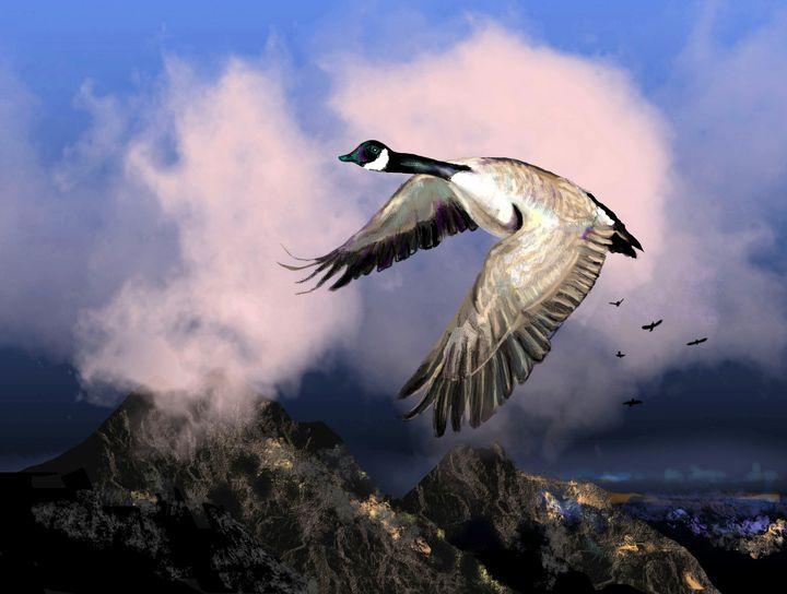 Canada goose - imaginart