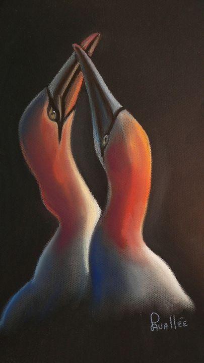 Gannets soft pastel drawing - imaginart