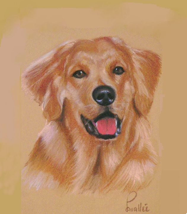 Golden retriever pastel portrait - imaginart