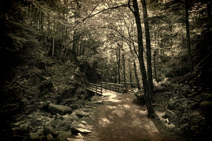 Shady woodland path - Unseen Gallery Prints