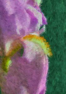 Impressionist Iris