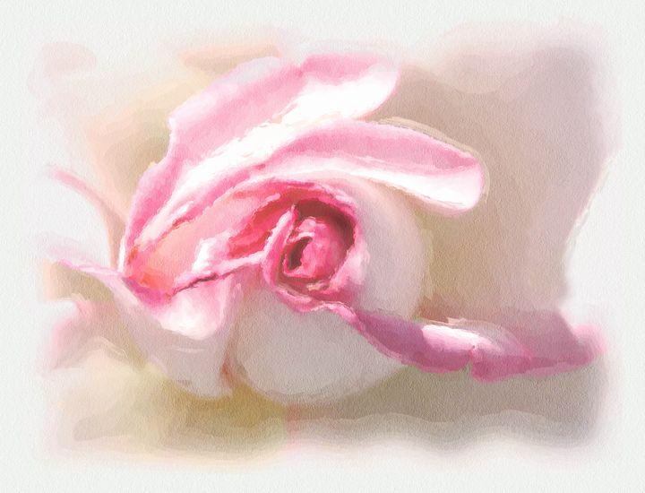 Pastel pink rose - Unseen Gallery Prints