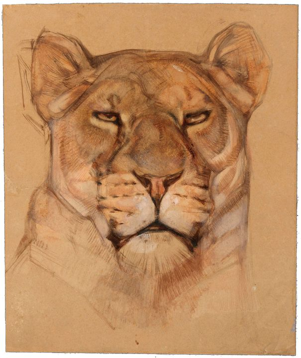 Portrait of a Lioness - Unseen Gallery Prints
