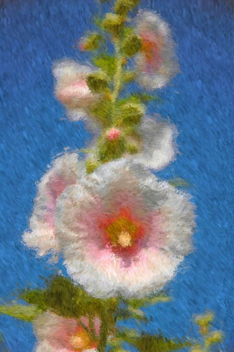 Summer Hollyhocks - Unseen Gallery Prints