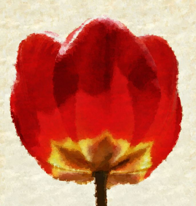 Majestic Tulip - Unseen Gallery Prints