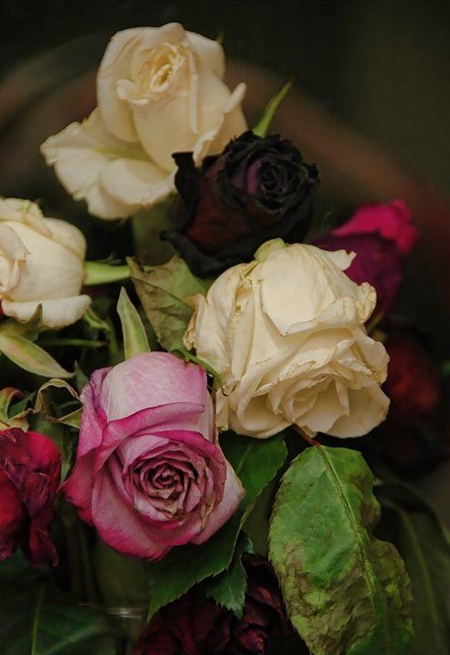 Memento Mori Roses - Unseen Gallery Prints