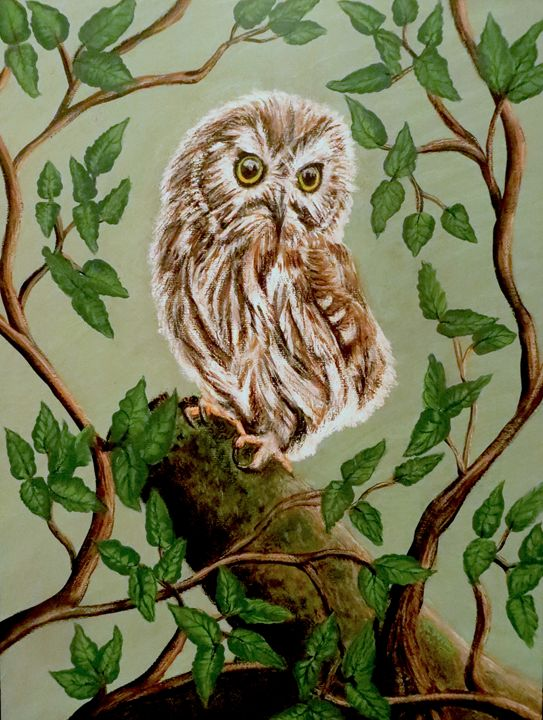 Northern Saw-Whet Owl - Teresa Wing