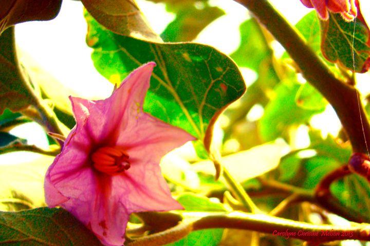 Egg Plant Blossom - My Naenia Art by Carolyne Christine