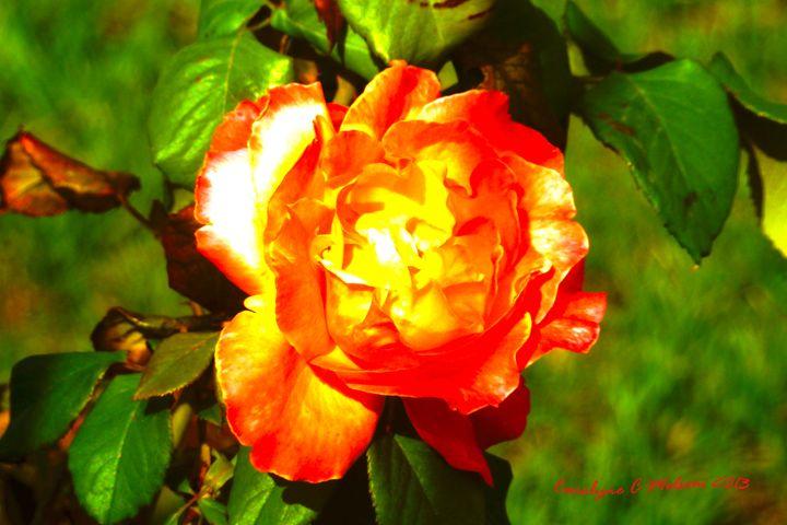 Sun Rose - My Naenia Art by Carolyne Christine