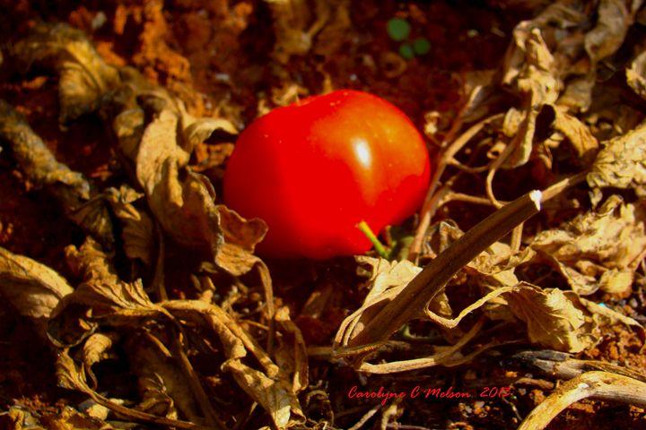 Red - My Naenia Art by Carolyne Christine