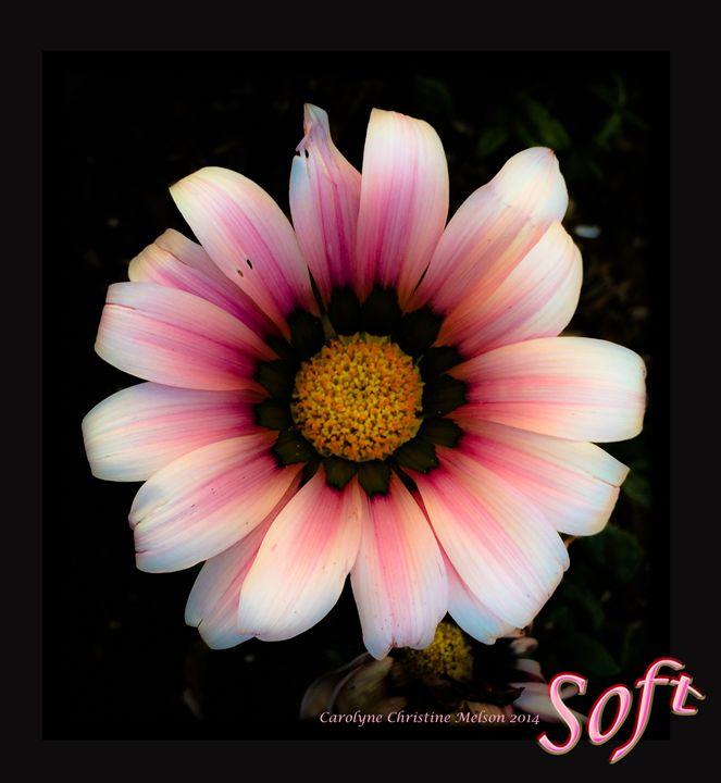 Soft! - My Naenia Art by Carolyne Christine