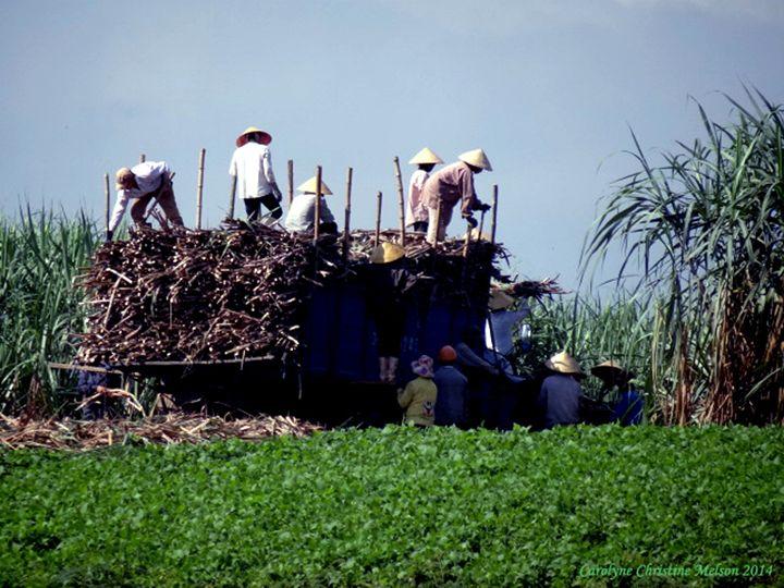 Working In The Field! - My Naenia Art by Carolyne Christine