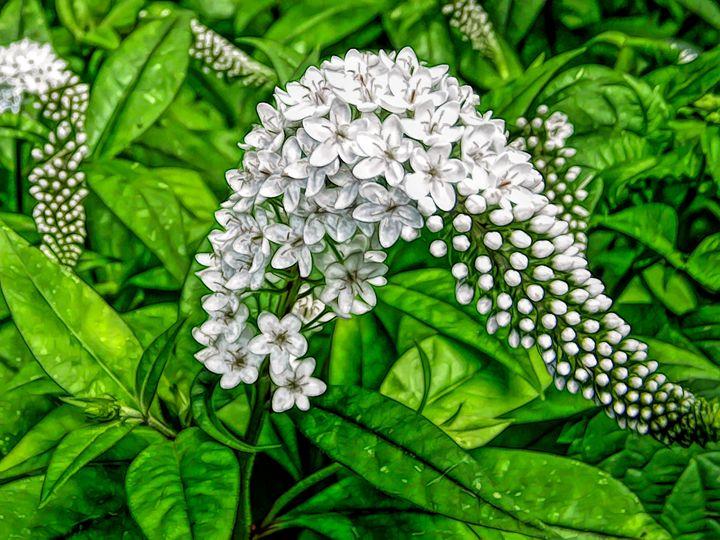 FWC Gooseneck Flower - Aimee L Maher